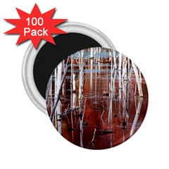 Swamp2 Filtered 2.25  Button Magnet (100 pack)