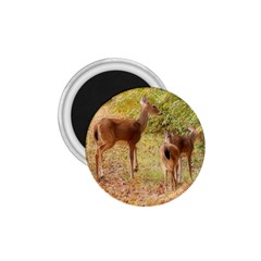 Deer in Nature 1.75  Button Magnet