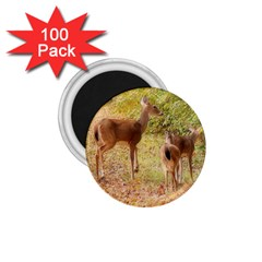 Deer In Nature 1 75  Button Magnet (100 Pack)