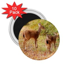 Deer In Nature 2 25  Button Magnet (10 Pack)