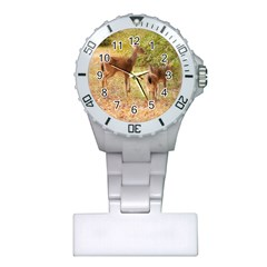 Deer in Nature Nurses Watch