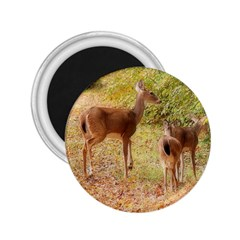 Deer in Nature 2.25  Button Magnet
