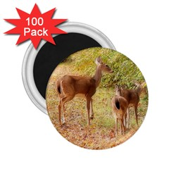Deer in Nature 2.25  Button Magnet (100 pack)