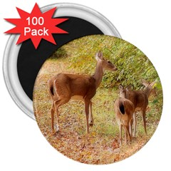 Deer in Nature 3  Button Magnet (100 pack)