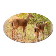 Deer in Nature Magnet (Oval)