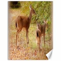 Deer in Nature Canvas 12  x 16  (Unframed)