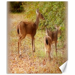 Deer in Nature Canvas 20  x 24  (Unframed)