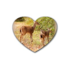 Deer in Nature Drink Coasters 4 Pack (Heart)