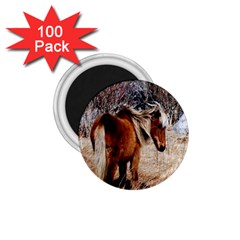 Pretty Pony 1.75  Button Magnet (100 pack)