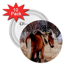 Pretty Pony 2 25  Button (10 Pack)
