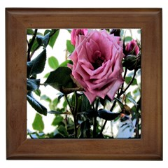 Rose Framed Ceramic Tile