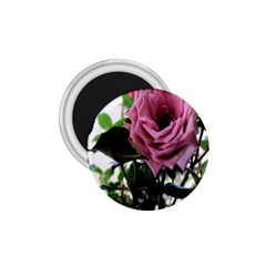 Rose 1 75  Button Magnet