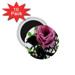 Rose 1.75  Button Magnet (10 pack)