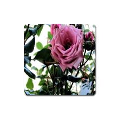 Rose Magnet (Square)