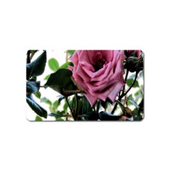 Rose Magnet (Name Card)