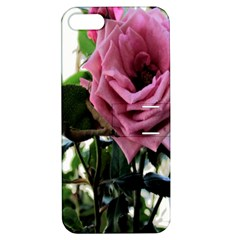 Rose Apple Iphone 5 Hardshell Case With Stand
