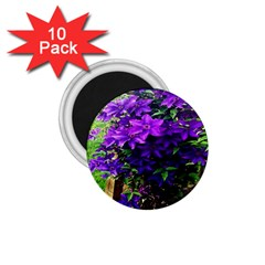 Purple Flowers 1 75  Button Magnet (10 Pack)