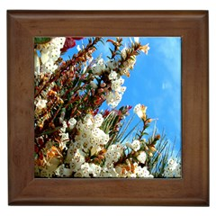 Australia Flowers Framed Ceramic Tile