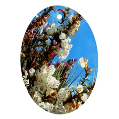 Australia Flowers Oval Ornament (Two Sides)