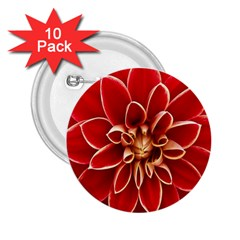 Red Dahila 2.25  Button (10 pack)