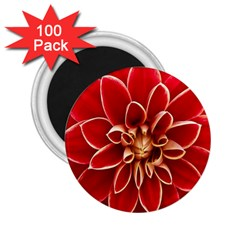 Red Dahila 2.25  Button Magnet (100 pack)