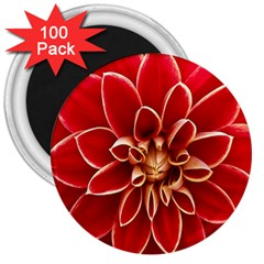 Red Dahila 3  Button Magnet (100 pack)