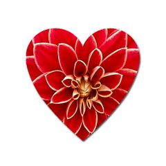 Red Dahila Magnet (heart)