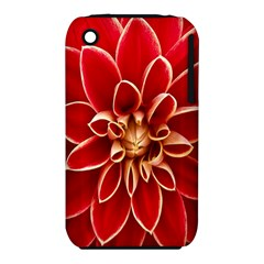 Red Dahila Apple Iphone 3g/3gs Hardshell Case (pc+silicone)