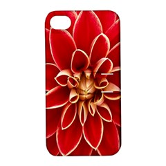 Red Dahila Apple iPhone 4/4S Hardshell Case with Stand