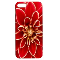 Red Dahila Apple Iphone 5 Hardshell Case With Stand