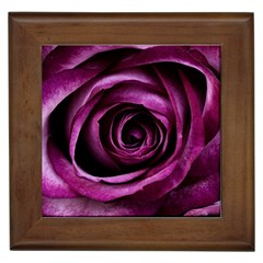 Deep Purple Rose Framed Ceramic Tile