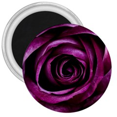 Deep Purple Rose 3  Button Magnet