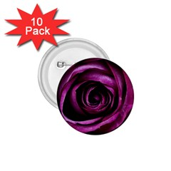 Deep Purple Rose 1 75  Button (10 Pack)