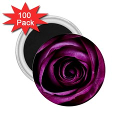 Deep Purple Rose 2.25  Button Magnet (100 pack)