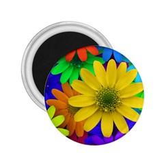 Gerbera Daisies 2 25  Button Magnet