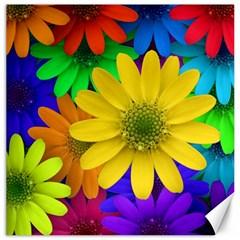 Gerbera Daisies Canvas 12  x 12  (Unframed)