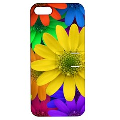 Gerbera Daisies Apple Iphone 5 Hardshell Case With Stand