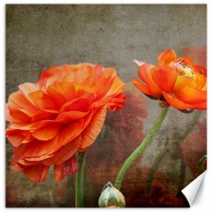 Orange Rose From Bud To Bloom Canvas 16  X 16  (unframed)