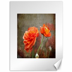 Orange Rose From Bud To Bloom Canvas 36  x 48  (Unframed)