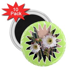 20131123 3 2 25  Button Magnet (10 Pack)