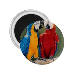 Feathered Friends 2.25  Button Magnet