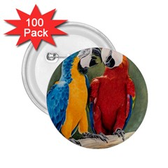 Feathered Friends 2 25  Button (100 Pack)