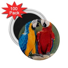 Feathered Friends 2.25  Button Magnet (100 pack)