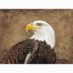 Eagle Canvas 12  x 16  (Unframed)