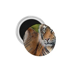 Soft Protection 1.75  Button Magnet