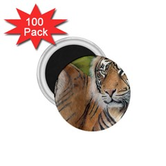 Soft Protection 1 75  Button Magnet (100 Pack)