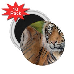 Soft Protection 2.25  Button Magnet (10 pack)
