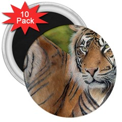 Soft Protection 3  Button Magnet (10 pack)