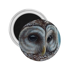 Barred Owl 2.25  Button Magnet
