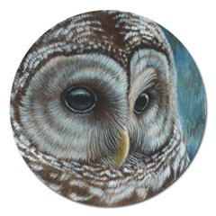 Barred Owl Magnet 5  (round)